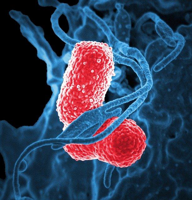 bacteria Obboy Media   অব্যয় মিডিয়া